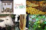 Camperola Tours